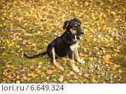 Щенок на траве. Стоковое фото, фотограф Алёна Замотаева / Фотобанк Лори
