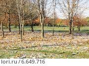 Осенний парк. Стоковое фото, фотограф Илья Хаскин / Фотобанк Лори