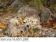 Подорожник на камне. Стоковое фото, фотограф Ольга Ермакова / Фотобанк Лори