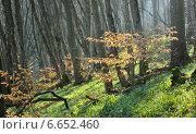 Купить «Солнечный лес», фото № 6652460, снято 8 ноября 2014 г. (c) александр жарников / Фотобанк Лори