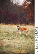 Собака на природе. Стоковое фото, фотограф Михаил Серов / Фотобанк Лори