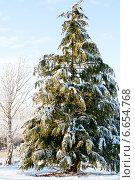 Купить «Снежная высокая ель», фото № 6654768, снято 8 декабря 2010 г. (c) Татьяна Кахилл / Фотобанк Лори