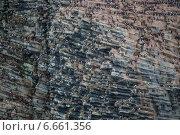 Купить «Колония птиц на обрыве скалы. Земля Франца-Иосифа», фото № 6661356, снято 31 июля 2013 г. (c) Николай Гернет / Фотобанк Лори