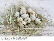 Перепелиные яйца. Стоковое фото, фотограф Елена Захарченко / Фотобанк Лори