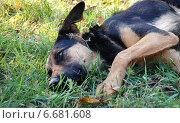 Грустная собака лежит на траве. Стоковое фото, фотограф Екатерина Ярославовна Мостовая / Фотобанк Лори