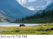 Озеро Аккем, Белуха, конь. Редакционное фото, фотограф Вячеслав Скоробогатов / Фотобанк Лори