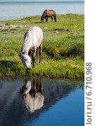 Озеро Аккем, лошади пасутся, фото № 6710968, снято 28 июля 2017 г. (c) Вячеслав Скоробогатов / Фотобанк Лори