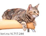 Купить «Кошка лежит на стуле», эксклюзивное фото № 6717244, снято 20 ноября 2014 г. (c) Куликова Вероника / Фотобанк Лори