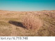 Купить «Перекати-поле», фото № 6719748, снято 21 ноября 2018 г. (c) Елена Корнеева / Фотобанк Лори