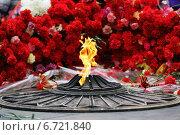 Вечный огонь на фоне красных гвоздик (2014 год). Редакционное фото, фотограф Ирина Черкашина / Фотобанк Лори