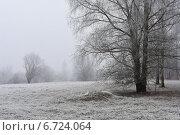Туманное утро. Стоковое фото, фотограф Ляля Рюмина / Фотобанк Лори
