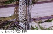 Купить «Перевязанные веревкой книги», видеоролик № 6725180, снято 20 ноября 2014 г. (c) Потийко Сергей / Фотобанк Лори