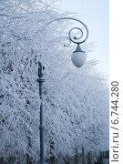 Фонарь в деревьях (2014 год). Стоковое фото, фотограф Инна Остановская / Фотобанк Лори