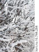 Замерзшие ветки дерева. Стоковое фото, фотограф Инна Остановская / Фотобанк Лори