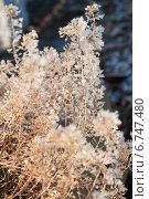 Трава во льдинках. Стоковое фото, фотограф Инна Остановская / Фотобанк Лори