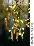 Весна. Стоковое фото, фотограф Раушания Аппакова / Фотобанк Лори
