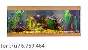 Купить «Большой прямоугольный аквариум с тропическими рыбами», фото № 6759464, снято 30 октября 2014 г. (c) Евгений Ткачёв / Фотобанк Лори