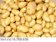Картофель. Стоковое фото, фотограф Светлана Давыдова / Фотобанк Лори