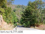Купить «Асфальтовая дорога  на тропическом острове. Таиланд», фото № 6771608, снято 31 марта 2020 г. (c) Vladimir Sviridenko / Фотобанк Лори