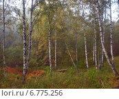 Купить «Роща в тумане», фото № 6775256, снято 14 сентября 2013 г. (c) Самойлова Екатерина / Фотобанк Лори