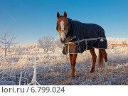 Купить «Конь в пальто», эксклюзивное фото № 6799024, снято 20 ноября 2014 г. (c) Литвяк Игорь / Фотобанк Лори