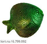 Разноцветное стеклянное блюдо в форме рыбы. Стоковое фото, фотограф Татьяна Кучинская / Фотобанк Лори