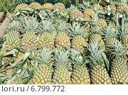 Купить «Ананасы, выложенные на прилавке», фото № 6799772, снято 19 сентября 2014 г. (c) Юлия Батурина / Фотобанк Лори