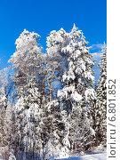 Купить «Зимний лес с заснеженными деревьями на фоне голубого неба», фото № 6801852, снято 2 февраля 2014 г. (c) Евгений Ткачёв / Фотобанк Лори