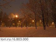 Купить «В заснеженном парке ночью. Район Гольяново. Москва», эксклюзивное фото № 6803000, снято 10 декабря 2014 г. (c) lana1501 / Фотобанк Лори