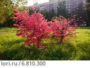 Красные листья. Стоковое фото, фотограф Александр Боровиков / Фотобанк Лори