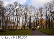 Облака и деревья (2014 год). Редакционное фото, фотограф Александр Боровиков / Фотобанк Лори