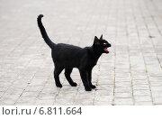 Купить «Чёрная кошка стоит на тротуаре и мяукает», эксклюзивное фото № 6811664, снято 26 сентября 2014 г. (c) Dmitry29 / Фотобанк Лори