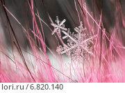 Купить «Макро снежинка крупным планом», фото № 6820140, снято 2 декабря 2014 г. (c) Tatiana Tetereva / Фотобанк Лори