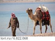 Верблюд и человек - бедуин идет по берегу моря в Египте. (camel and Bedouin are on the beach. Egypt) (2012 год). Редакционное фото, фотограф Оксана Тузова / Фотобанк Лори