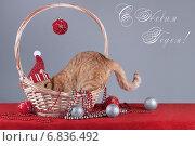 Кошка в шапочке прячется в корзинке. Стоковое фото, фотограф Елена Беззубцева / Фотобанк Лори