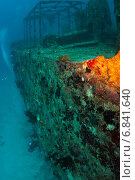 Купить «Затонувшее судно обросло кораллами», фото № 6841640, снято 11 февраля 2013 г. (c) Сергей Дубров / Фотобанк Лори
