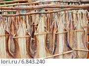 Купить «Хороший улов трески», фото № 6843240, снято 23 декабря 2011 г. (c) Виктория Катьянова / Фотобанк Лори
