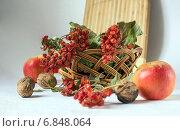 Красная калина в плетеной корзине. Стоковое фото, фотограф Daodazin / Фотобанк Лори