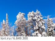 Купить «Зимний лес ярким солнечным днем», фото № 6849300, снято 2 февраля 2014 г. (c) Евгений Ткачёв / Фотобанк Лори