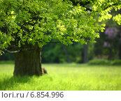 Купить «Весенний дуб с разноцветными листьями», фото № 6854996, снято 7 мая 2014 г. (c) Афанасьева Ольга / Фотобанк Лори