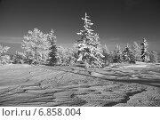 Купить «После снегопада в тайге. Дальний Восток», эксклюзивное фото № 6858004, снято 1 января 2015 г. (c) Валерий Акулич / Фотобанк Лори