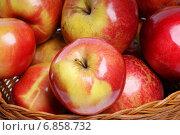 Яблоки. Стоковое фото, фотограф Андрей Оршак / Фотобанк Лори