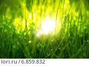 Зеленая трава на рассвете. Стоковое фото, фотограф Игорь Чайковский / Фотобанк Лори