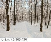 Купить «Тропинка в заснеженном лесу солнечным днем», фото № 6863456, снято 26 января 2014 г. (c) Григорий Белоногов / Фотобанк Лори