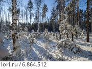 Морозное утро. Стоковое фото, фотограф Андрей Соколов / Фотобанк Лори