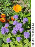 Купить «Клумба из однолетних цветов», эксклюзивное фото № 6866512, снято 23 июля 2014 г. (c) Елена Коромыслова / Фотобанк Лори
