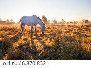 Купить «Лошадь, пасущаяся на поле», эксклюзивное фото № 6870832, снято 4 октября 2013 г. (c) Литвяк Игорь / Фотобанк Лори
