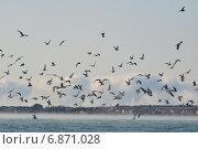 Купить «Стая чаек над парящим морем», фото № 6871028, снято 8 января 2015 г. (c) Игорь Архипов / Фотобанк Лори