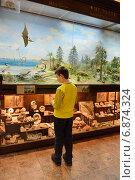 Купить «Государственный Биологический музей им. К.А. Тимирязева. Мальчик у витрины, рассказывающей о динозаврах», фото № 6874324, снято 8 января 2015 г. (c) Валерия Попова / Фотобанк Лори