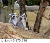 Животные в зоопарке. Стоковое фото, фотограф Евгений Питомец / Фотобанк Лори